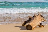 Driftwood on the beach. A beautifully weathered driftwood log Island beach,