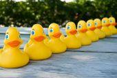On Duck Row
