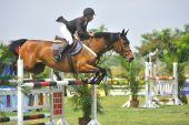 Equestrian Show Jumping Competition