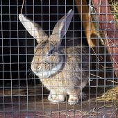pic of rabbit hutch  - Gray rabbit in cage on a sunny day - JPG