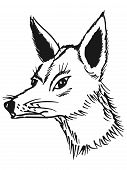 stock photo of jackal  - hand drawn sketch cartoon illustration of jackal - JPG