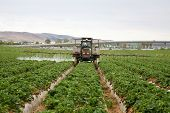 A Crop Sprayer, busy spraying Strawberry Fields with Insecticide in Orange County California. Strawb