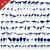 foto of siluet  - Set of  different animals - JPG
