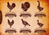 Diagram Cut Carcasses Chicken, Turkey, Goose, Duck