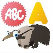 A is for Anteater