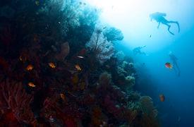 image of bottomless  - Scuba divers exploring underwater reef wall - JPG