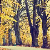 Autumn Landscape With Road And Beautiful Colored Trees, Vintage Look