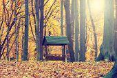Animals Feeder In Autumn Forest, Vintage Look
