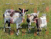 Calendar For 2015 Year With Goat And Two Kids