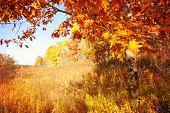 Autumn scene in Wisconsin