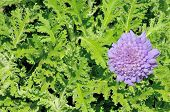 picture of antidepressant  - Composite of an African Wormwood plant and flower - JPG