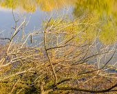 Deadfall and the Reflection