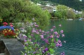 Flowers And Lake Geneva, Montreux