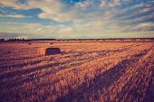 stock photo of harvest  - Vintage photo of straw bales on stubble field - JPG