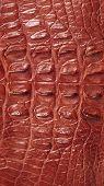 picture of alligator  - Alligator patterned background - JPG
