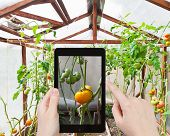 stock photo of greenhouse  - travel concept  - JPG