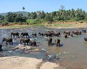 stock photo of bathing  - tropics - JPG