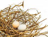 stock photo of bird egg  - Bird eggs and net Nest Zebra dove  - JPG