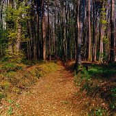 stock photo of dirt road  - Dirt Road in the Forest Swiss Alps Vintage Style Toned Picture - JPG