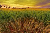 stock photo of farmhouse  - Farmhouse and Green Sloping Meadows of Tuscany at Sunset - JPG