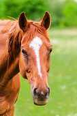 foto of feeding horse  - Powerful beautiful horse standing in the field and looking straight - JPG