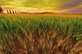 foto of farmhouse  - Farmhouse and Green Sloping Meadows of Tuscany at Sunset - JPG
