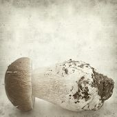 foto of boletus edulis  - textured old paper background with porcino mushroom Boletus edulis - JPG