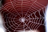 stock photo of spider web  - spider web is wet with morning dew. Red background shows through the intricate pattern. ** Note: Slight blurriness, best at smaller sizes - JPG