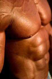 picture of body builder  - body - JPG