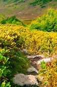 A Rocky Mountain Path Between Autumn Rhododendrons poster