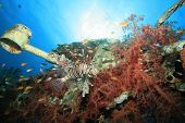Lionfish on coral-covered shipwreck