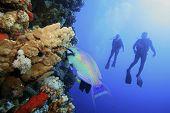 Scuba divers observe a Parrotfish