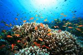 Lively Coral Reef