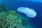 Environmental Problem - plastic trash on a coral reef. (I cleared up this and other rubbish from the