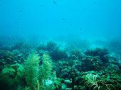 Reef Of Bonaire
