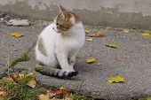 Stray Animals, Pets, Animals Concept.  Cute Tabby Cat On The Street. Sad Stray Cat. Cute Cat On The  poster