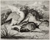 Old illustration of duke and drake, alive and dead. Created by Freeman after Landseer, published on