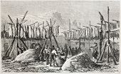 Old illustration of cod drying process in Fiskerness, Greenland. Created by Girardet, published on L'Illustration Journal Universel, Paris, 1857