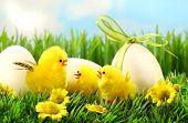 Pollitos de Pascua amarillo en la hierba alta