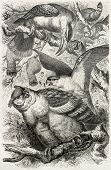 Greyish Eagle-owl old illustration (Bubo cinerascens) and other birds. Created by Kretschmer, publis