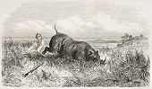Nashorn und Hunter in der Savanne, alte Abbildung. erstellt von Dore nach Anderson, veröffentlichte o