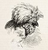 Houdan chicken head old illustration. Created by Jacque, published on L'Illustration, Journal Universel, Paris, 1858