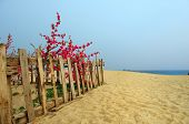 fence, sand dunes and flower in seaside