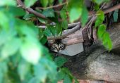Kitten On A Branch, Kitten Looks Through The Foliage, Kitten Walking On A Tree poster