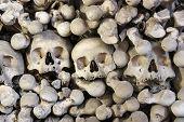 Heap Of Human Bones