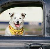 a dog sitting in a car waiting