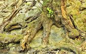 Root of an old tree