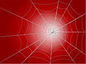 Spider Wed