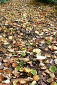 autumn, leaves and ground