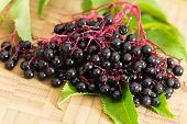 Autumn Still - Life with ripe black Elder Berries
